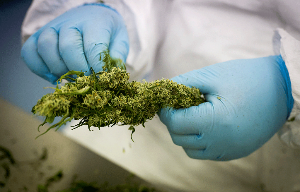 Denmark permits medicinal cannabis, but doctors are reluctant