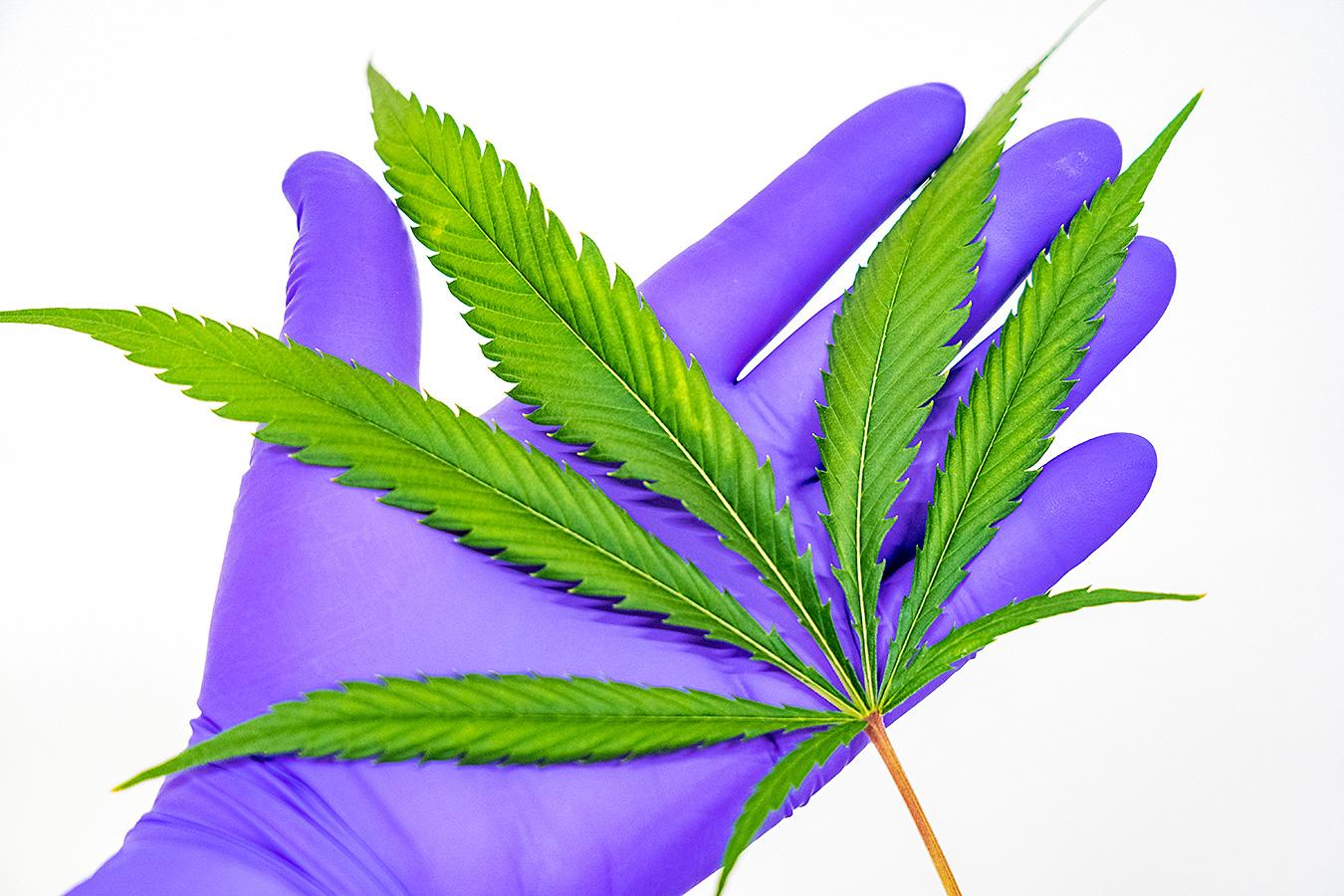 Aktueller Stand medizinischer Cannabis-Investitionen