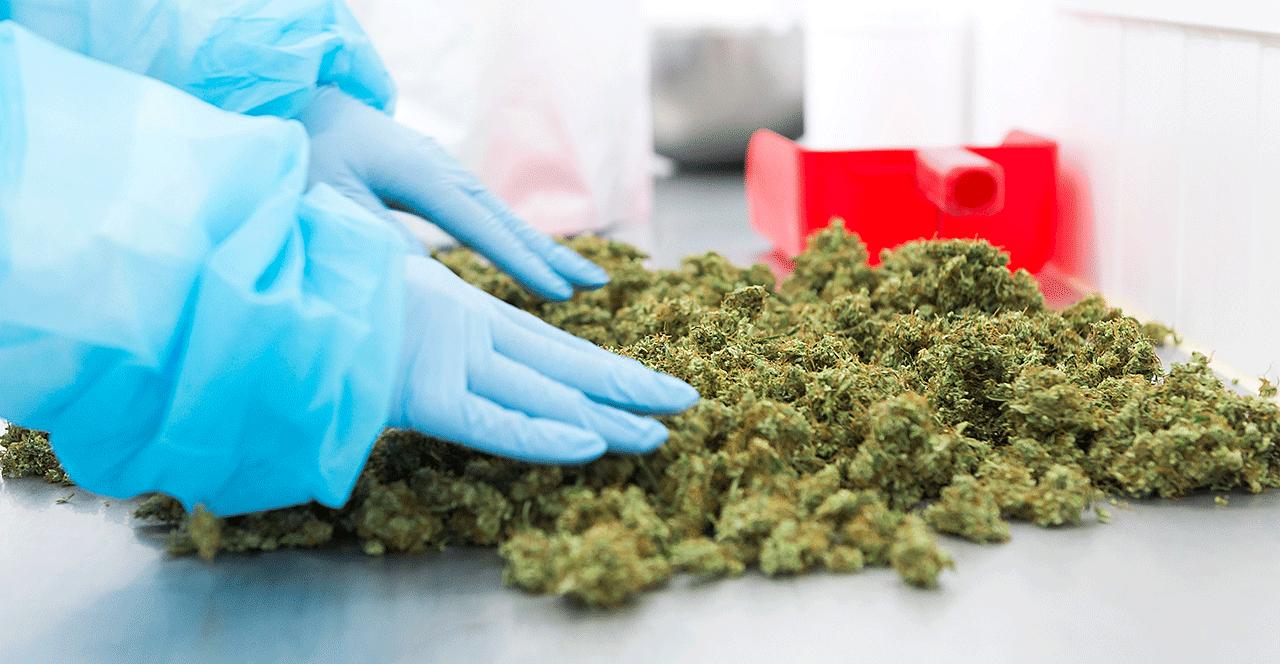 Flos Medicinal Cannabis By Bedrocan 25
