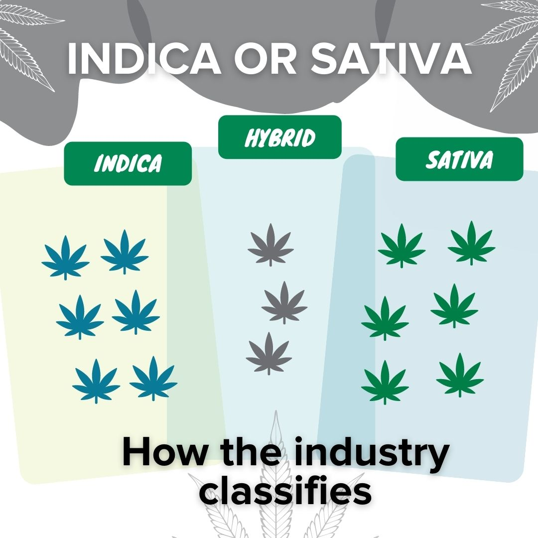 Indica or Sativa - how the industry classifies