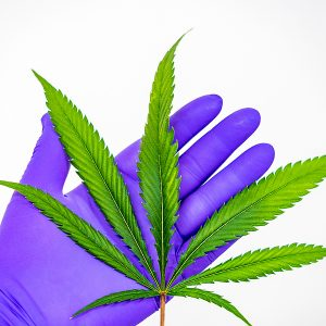 'IBD patients feel a lot better after being treated with cannabis'