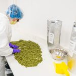 Who is involved in the Dutch cannabis supply chain?