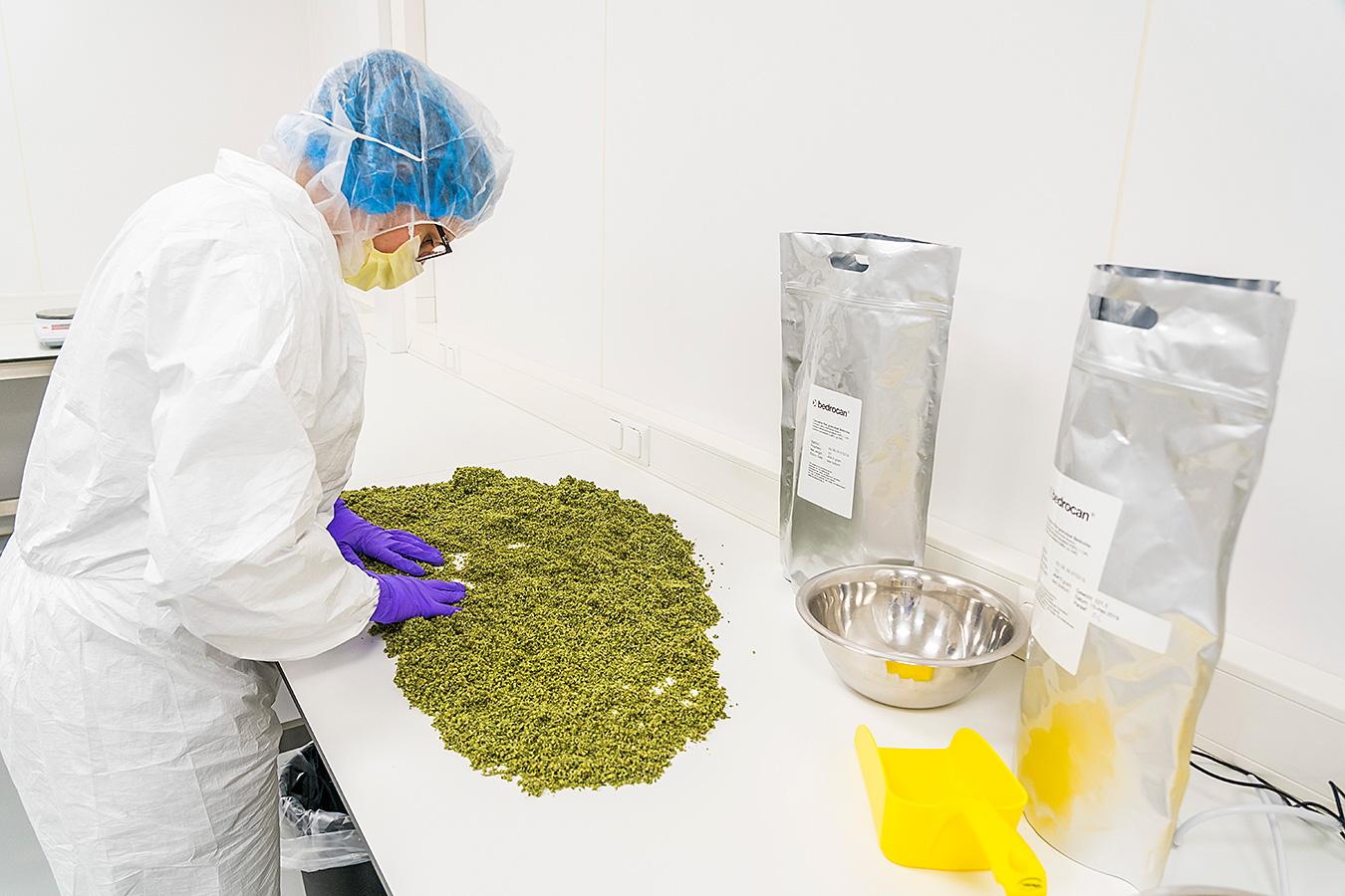 Wie zijn er verantwoordelijk voor de levering van medicinale cannabis in Nederland?